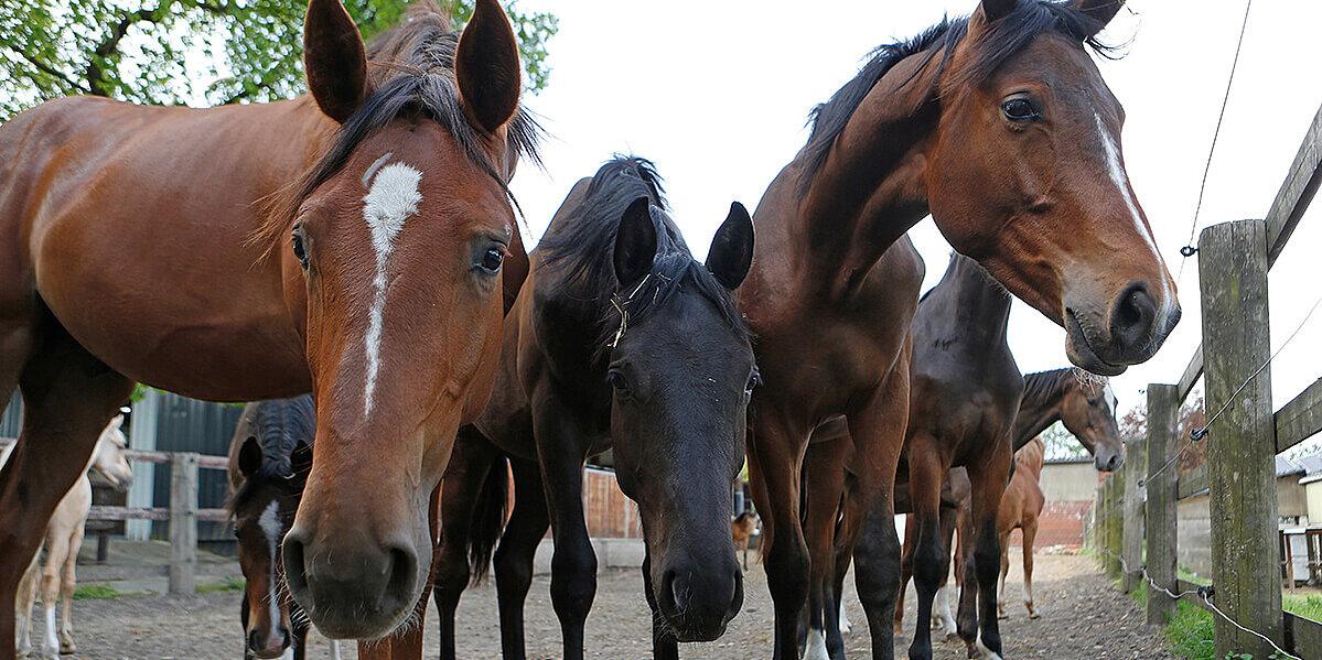 Mehrere Pferde