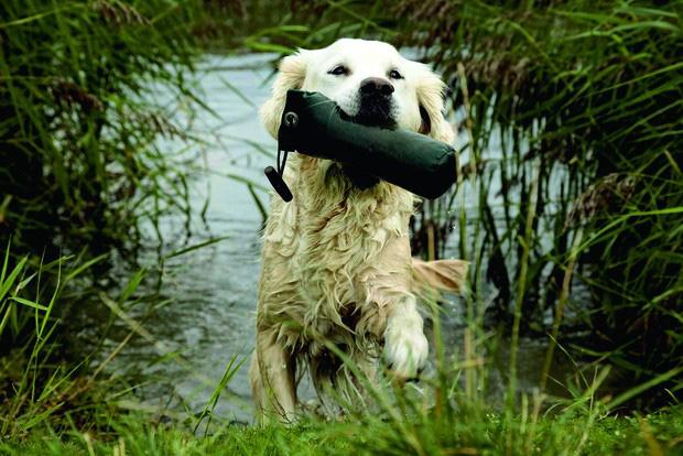 Senior Hund spielt trotz seines Alters im Wasser.
