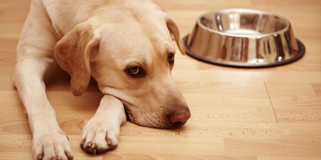 Hund neben leerem Fressnapf: Durchfall und Erbrechen beim Hund