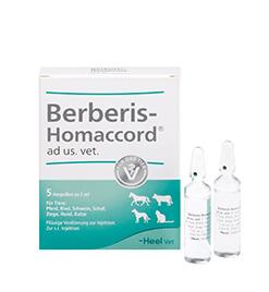 Berberis-Homaccord&lt;sup&gt;<sup>&reg;</sup>&lt;/sup&gt; ad us. vet. Ampullen