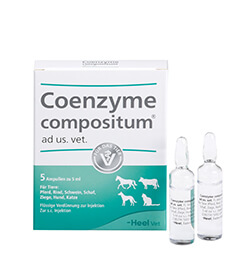 Coenzyme compositum ad us. vet. Ampullen