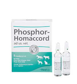 Phosphor-Homaccord<sup><sup>®</sup></sup> ad us. vet. Ampullen