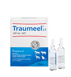 Traumeel<sup><sup>®</sup></sup> LT ad us. vet. Ampullen